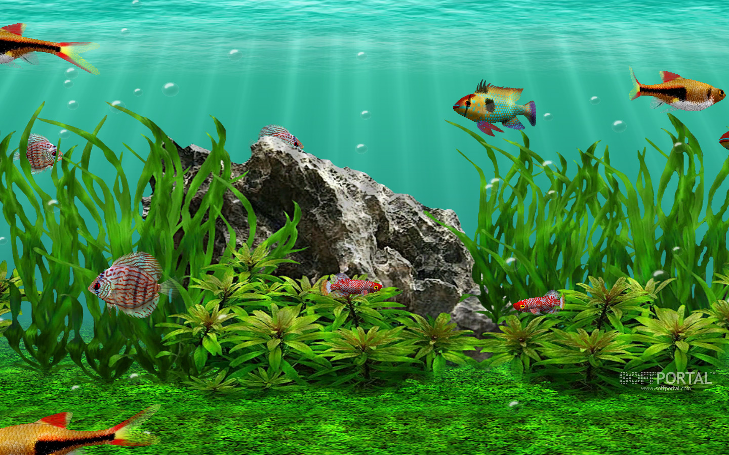 3d fish school screensaver for Swimming fish screensaver